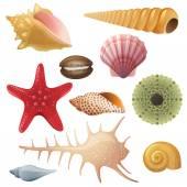 Seashell icons — Stock Vector