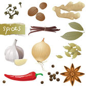 Spices — Stock Vector