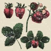 Hand drawn strawberry set — Stock Vector