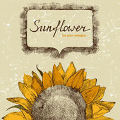 Hand drawn background with sunflower — Stock Vector