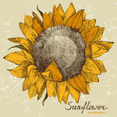 Hand drawn sunflower — Vector de stock