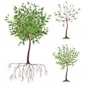 Vector tree — Stock Vector