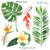 Watercolor tropical plants — Stock Vector