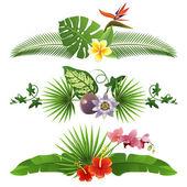 Tropical borders — Stock Vector