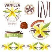 Wanilia — Wektor stockowy