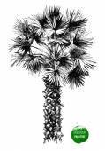 Hand dras palm tree — Stockvektor