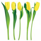 5 yellow tulips — Stock Vector
