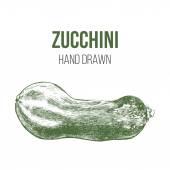 Hand drawn zucchini — Stock Vector
