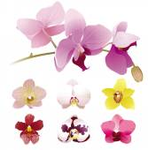 Realistic orchid flowers — Stock Vector