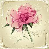 Retro-styled hand drawn peony flower — Stock Vector