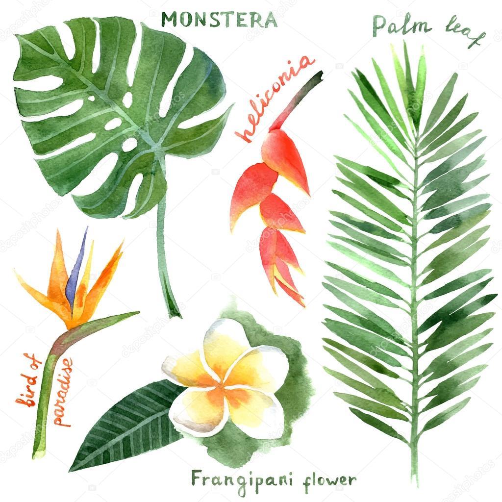 水彩的热带植物 — 图库矢量图像08