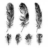 Hand drawn feathers set — Stock Vector