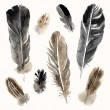 Watercolor feathers set on white background — Stock Vector #73196843