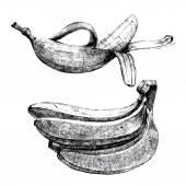 Hand drawn bananas — Stock Vector