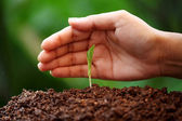 Plant growing from soil  — Stock Photo