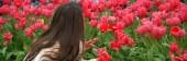 Tulip Garden — Stockfoto