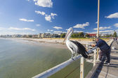 People fishing at Henley beach jetty, Adelaide, South Australia — Stock Photo