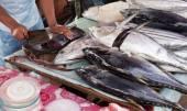 Massacrar o atum — Fotografia Stock