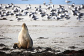 Sea lion resting on a beach — Stock Photo
