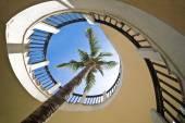 Palm tree through a spiral staircase — Stock Photo