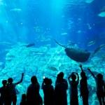 Постер, плакат: People in an aquarium