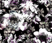 Monochrome peonies — Fotografia Stock