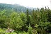 なだらかな丘陵の端に緑の森 — ストック写真