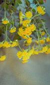 Yellow fresh  flowers — Stock Photo