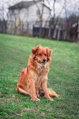 Dog Collar Sitting On Grass — Stock Photo
