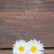 Daisy flowers on wooden background — Stock Photo #70259771