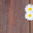 Daisy flowers on wooden background — Stock Photo #70260179