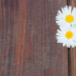 Daisy flowers on wooden background — Stock Photo #70260419