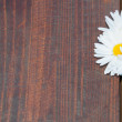 Daisy flowers on wooden background — Stock Photo #70260525