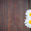 Daisy flowers on wooden background — Stock Photo #70260529