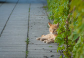 Yellow cat relaxing on the street in leaves — Stock Photo