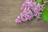 木制背景多彩紫丁香鲜花 — 图库照片