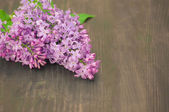 Colorful lilac flowers on wooden background — Stock Photo