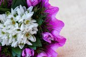Snowdrop flowers bouquet with fir twigs — Stock Photo