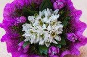 Sněženka kytice s větvičky jedle — Stock fotografie