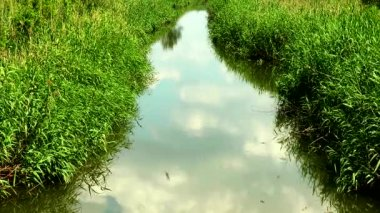 River overgrown with reeds. clouds are reflected in water — Stock Video