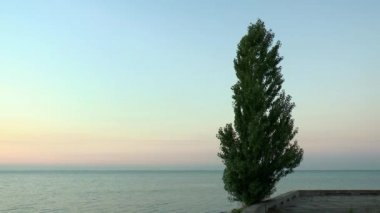 Poplar against the backdrop of pre-dawn sky and sea — Stock Video