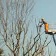 Gardener on a Crane Cutting Tree Branches — Stock Video #65903735