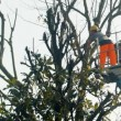 Gardener on a Crane Cutting Tree Branches — Stock Video #65916507