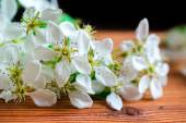Pears tree flowers background — Stock Photo