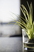 Decorative glass with grass inside — Stock Photo