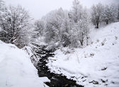 Snowy trees with creek in the winter — Stock Photo