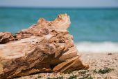Driftwood log on the beach — Foto Stock