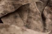 Autumn leafs background — Stock Photo