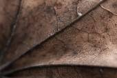 Autumn leaf texture — Stock Photo