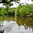 Lake in the forest — Stock Photo #64539193